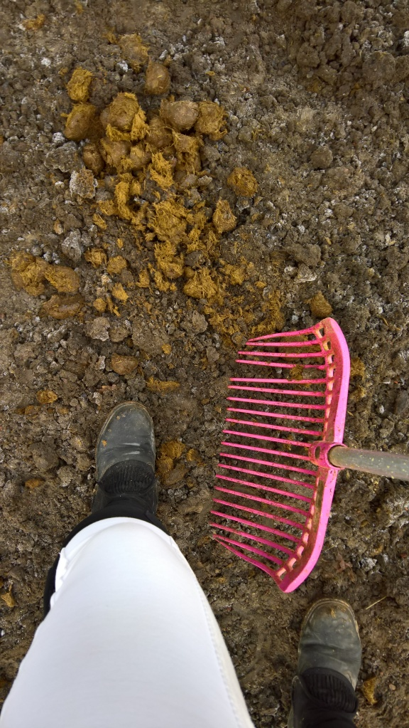 Klart man ska ha vita ridbyxor när man mockar hagen... 😜