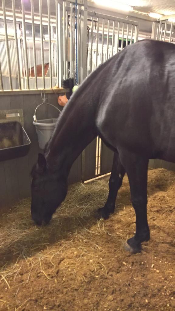 Titta! Ljus i boxen! Man ser hästen igen! Hurraaaa!!!