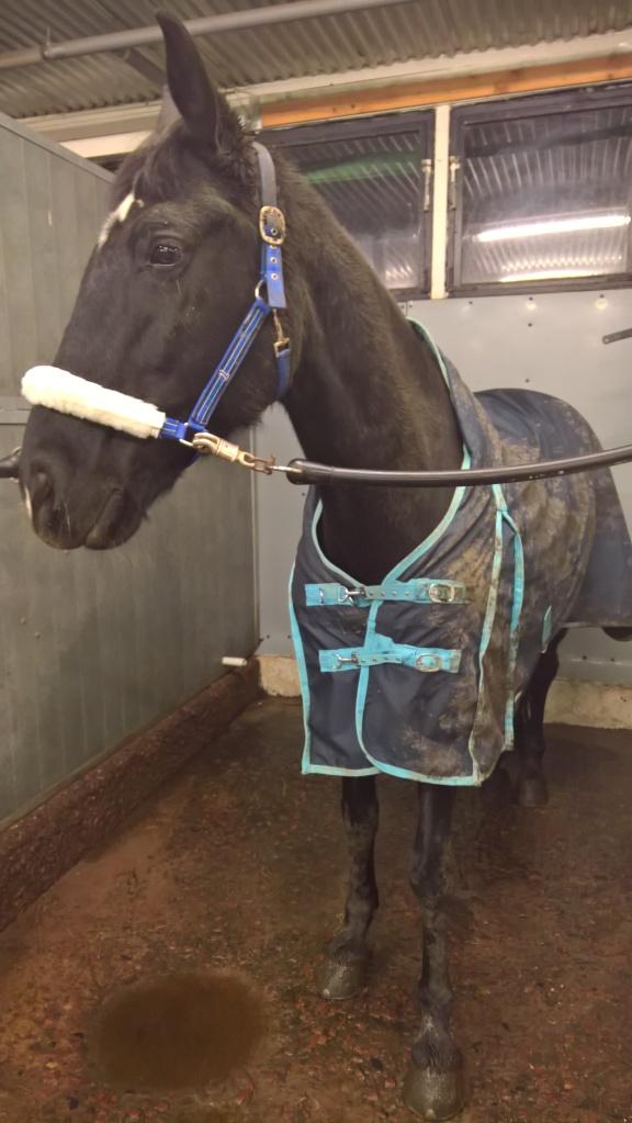 Spola hästben, och spola täcke ...