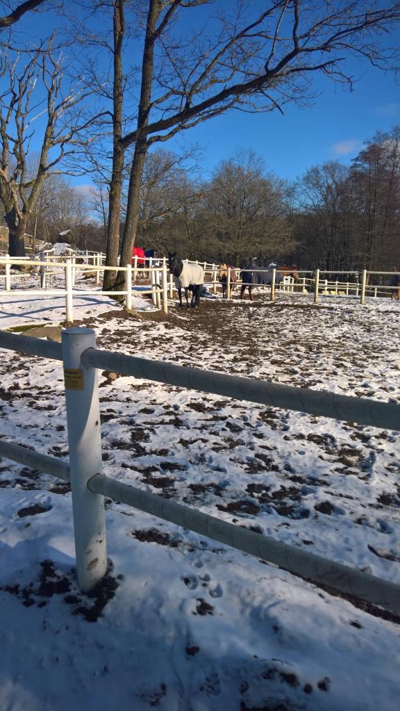 Solbad i snön